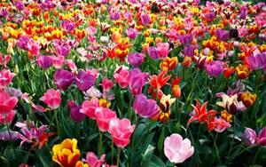 A la Primavera